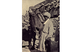 camel-driver-bukhara-thumb-aissnb-111